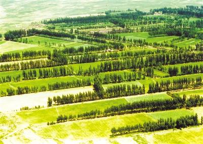 """近年来,达拉特旗的林业工作以""""科学发展,富民强旗""""为中心,以""""国家林业"""
